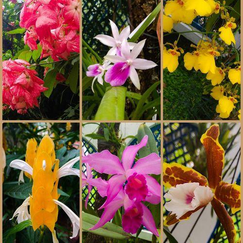 Jardim Botanico , Rio de Janeiro , JwCreation , Flowers , Beautiful