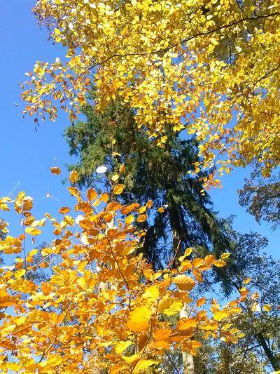 piękna jest polska,złota jesień