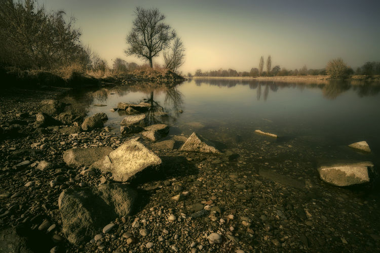 Tree by the river Bare Tree Beauty In Nature Danube Day Idyllic Landscape Nature No People Outdoors Reflection Scenics Sky Tranquil Scene Tranquility Tree Water