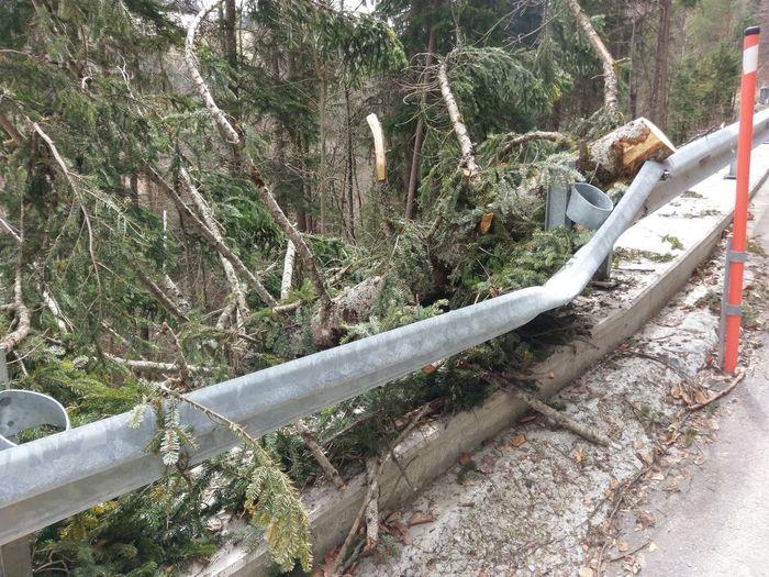 no mercy Tree Destruction Road Leitblanke Straßen 😚
