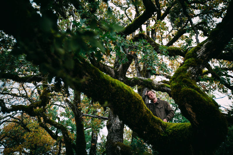 Low angle view of man sitting on tree trunk