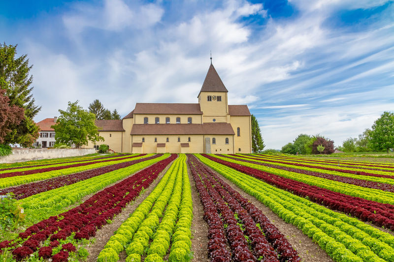 Lettuce cultivation on lake Constance, island Reichenau, Germany Field Architecture Rural Scene Building Farm Land Agriculture Sky Plant Nature Bodensee Lake Constance Island Reichenau Insel Reichenau Lettuce Cultivation Growing Organic Biology Field Nutrition Diet Healthy Eating Tourism
