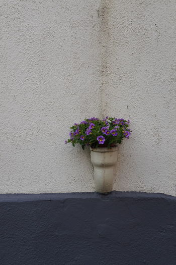 Close-up of flower pot against wall