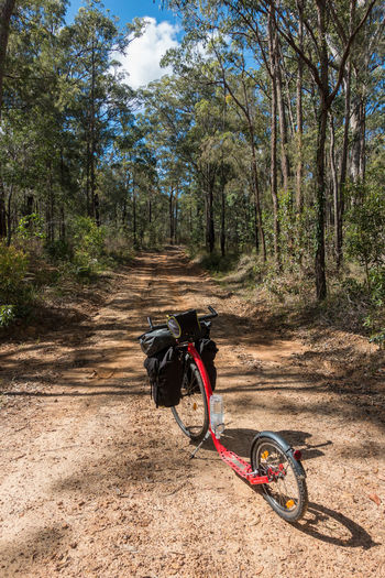 Kickbike (bicycle) on dirt road leading through forest