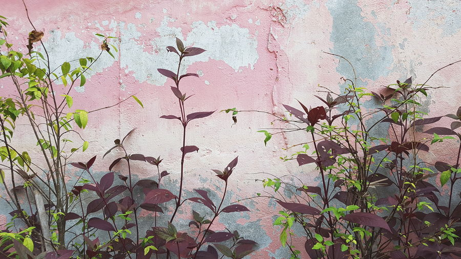 Pink wall and flowers Full Frame Outdoors Day Backgrounds No People Textured  Plant Growth Nature Architecture Close-up Pink Wall EyeEmNewHere EyeEm Best Shots Beauty In Nature EyeEm Nature Lover Pink Color