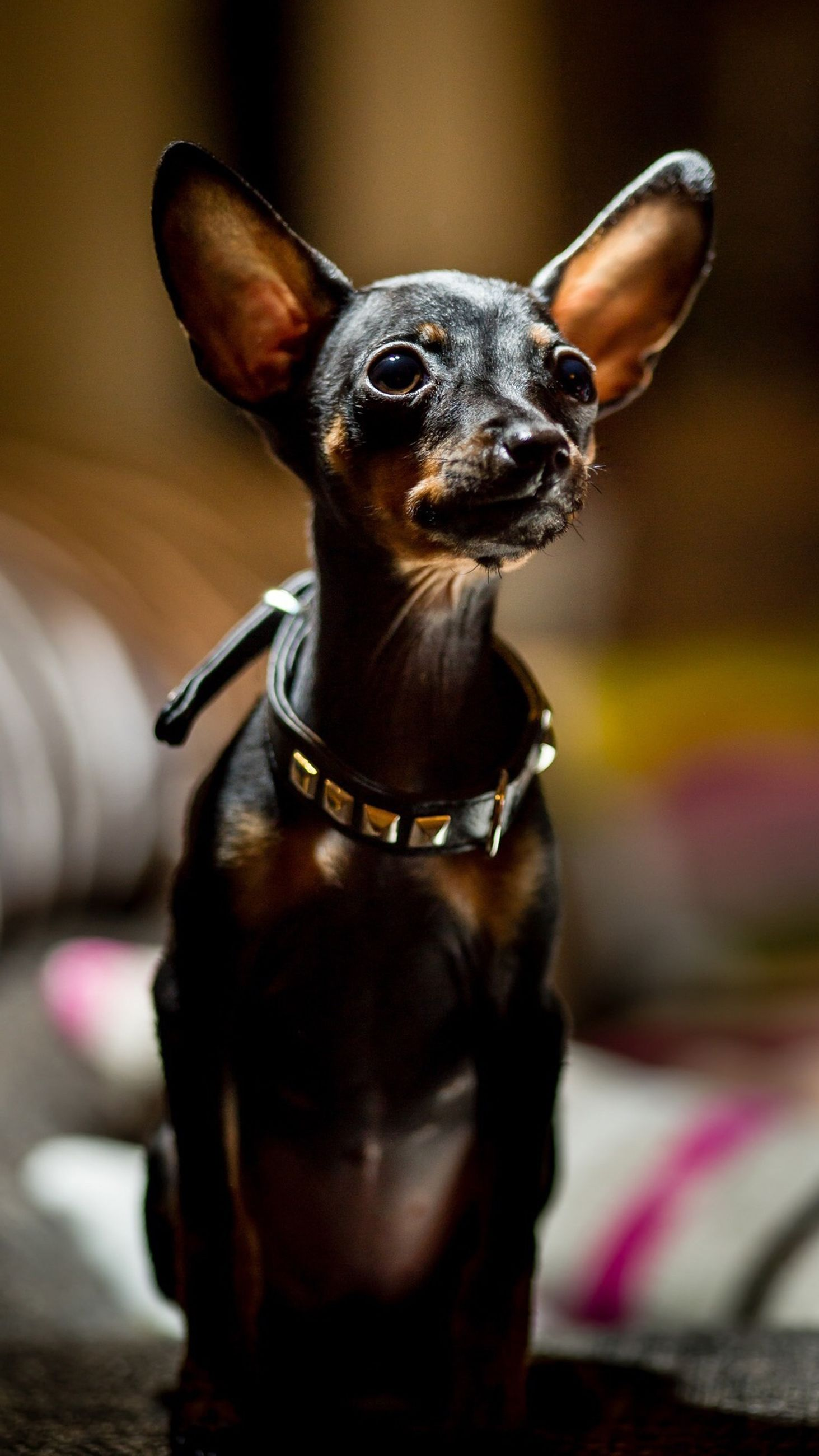 one animal, animal themes, focus on foreground, close-up, animals in the wild, wildlife, insect, indoors, selective focus, pets, dog, domestic animals, day, no people, zoology, animal body part, animal head, portrait, front view