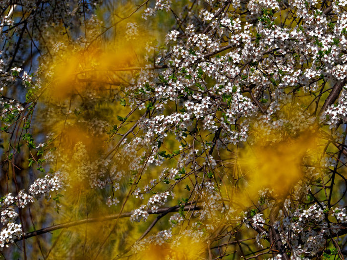 Plant Beauty In Nature Yellow Flower Nature Growth Tree No People Branch Flowering Plant Springtime Day Water Freshness Plant Part Outdoors Autumn Fragility Close-up Leaf