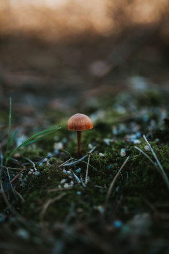 Mushroom Mushrooms Mushrooms 🍄🍄 Mushroom_pictures Mushroomphotography Winter Into The Woods Into The Wild Nature Vegetable Growth Land Freshness Outdoors Day Beauty In Nature Selective Focus Fungus Plant Close-up Toadstool Field Wallpaper Wallpapers WallpaperForMobile
