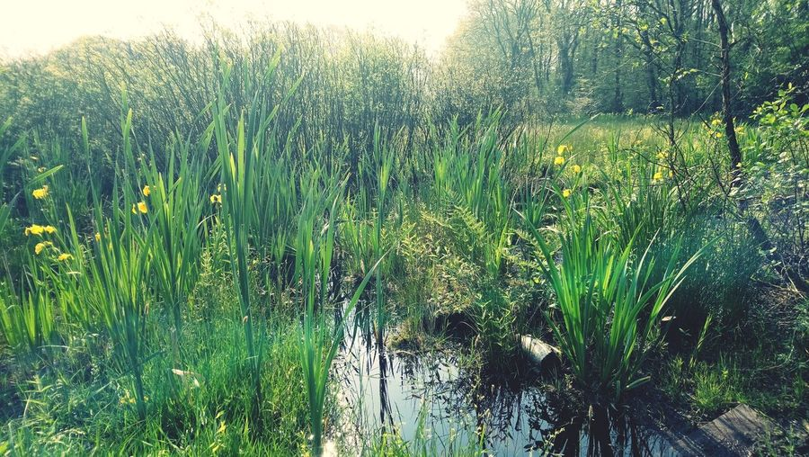 Swamp. Swamp Backgrounds Full Frame Close-up Grass Plant Green Color Growing Plant Life