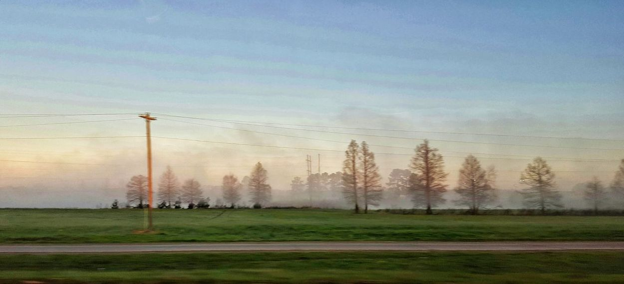 view from the road Tree Sky Nature Tranquility No People Beauty In Nature Outdoors Sport Fog Day South Louisiana Tree Tree_collection  Trees And Sky Commute Scenery Branch Textures In Nature Misty Landscape