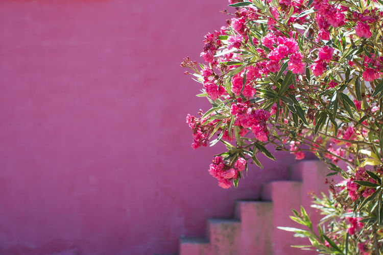Architecture Beauty In Nature Branch Building Exterior Built Structure Close-up Day Development Flower Fragility Freshness Growth Nature No People Outdoors Pink Color Rise Tree