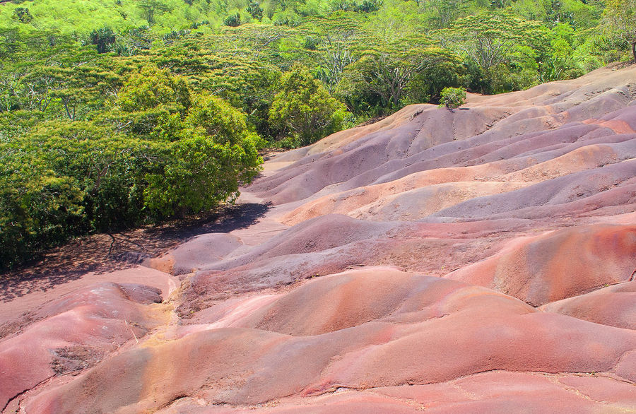 Seven Coloured Earths This phenomena can be visited on the island Mauritius. This washed-out earths consist of ferric oxides (red to dark) and aluminium oxides (blue and purple). The background shows a typical vegetation for this island. But less than 2% of the natural forest is left and over 200 of the 315 endemic plant species are endangered. Beauty In Nature Colored Earth Colorful Eroded Basalt Hydrolysis Island Lava Rock Mauritius Nature Nature's Diversities Orange Purple Red Seven Coloured Earths Siebenfarbige Erde Terres Des Sept Couleurs Tourism Tourism Destination Vegetation Vegetation Free