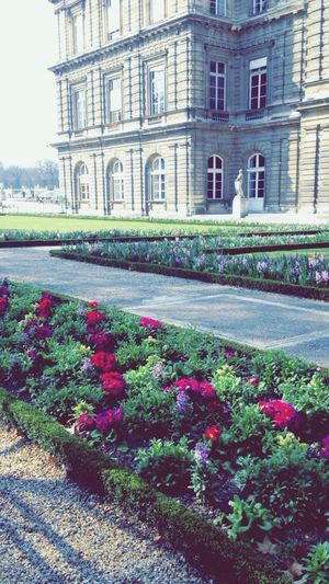 Jardin Du Luxembourg Sénat Paris Flowers Colorful Sun Vegetation