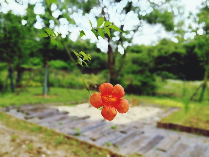 Flower Head Tree Flower Rural Scene Agriculture Horticulture Leaf Social Issues Vine - Plant