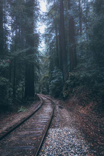 Bamboo Grove Beauty In Nature Day Forest Growth Nature No People Outdoors Railroad Track Scenics The Way Forward Tranquility Tree