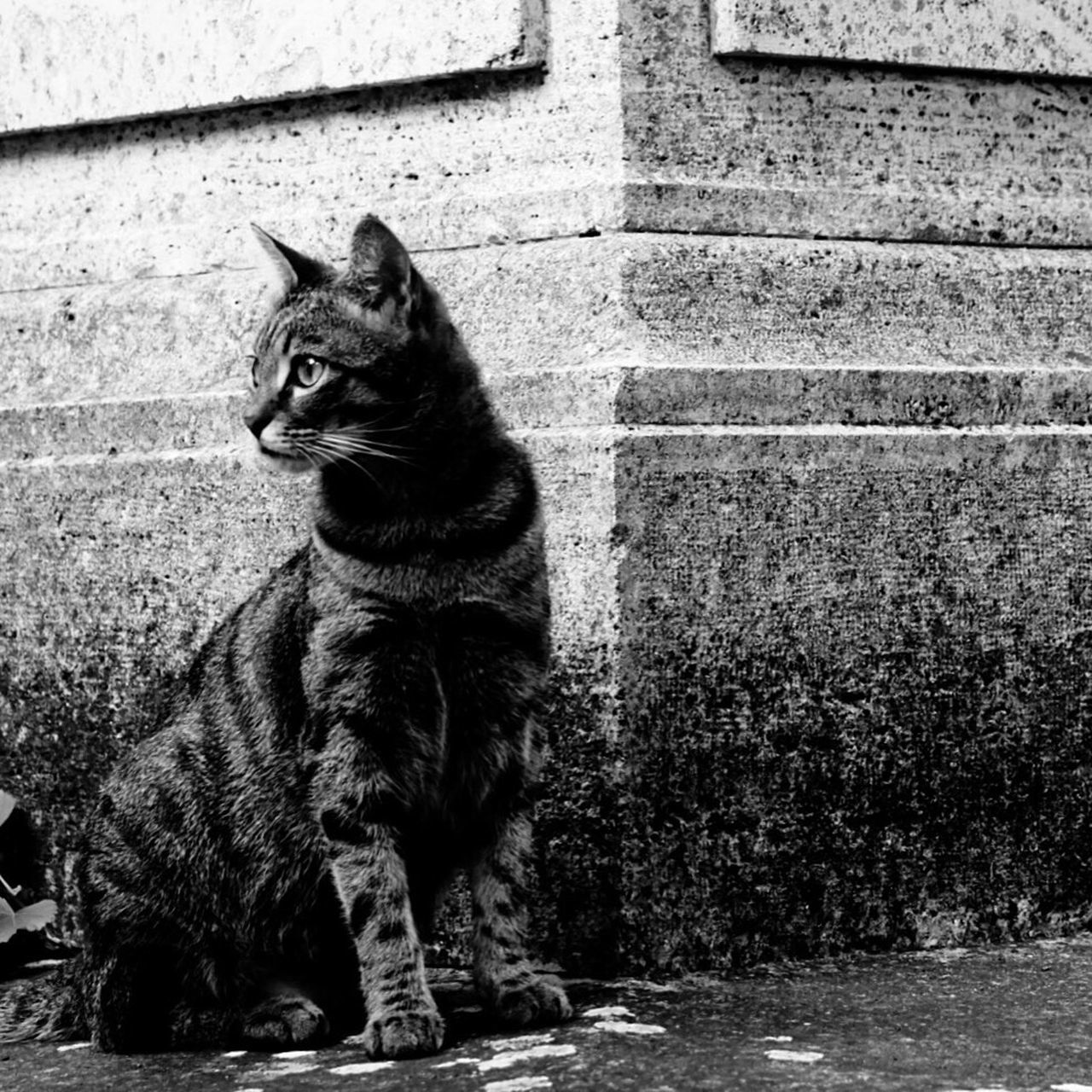 domestic cat, animal themes, feline, one animal, pets, cat, domestic animals, mammal, sitting, outdoors, day, no people, built structure, architecture, building exterior