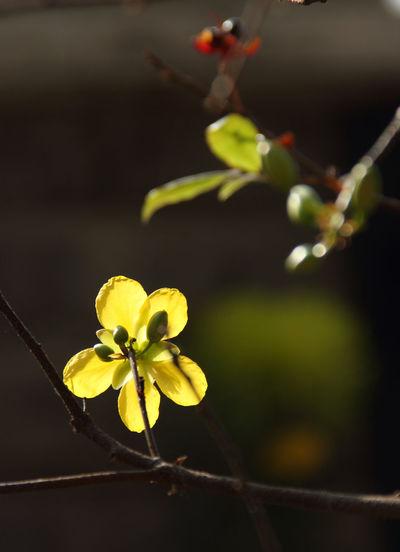 Flower in the sunshine Yellow Flower Back Lighting Back-lit Flower Flower Flower Life Forsythia Flowers Fragility Petal Yellow