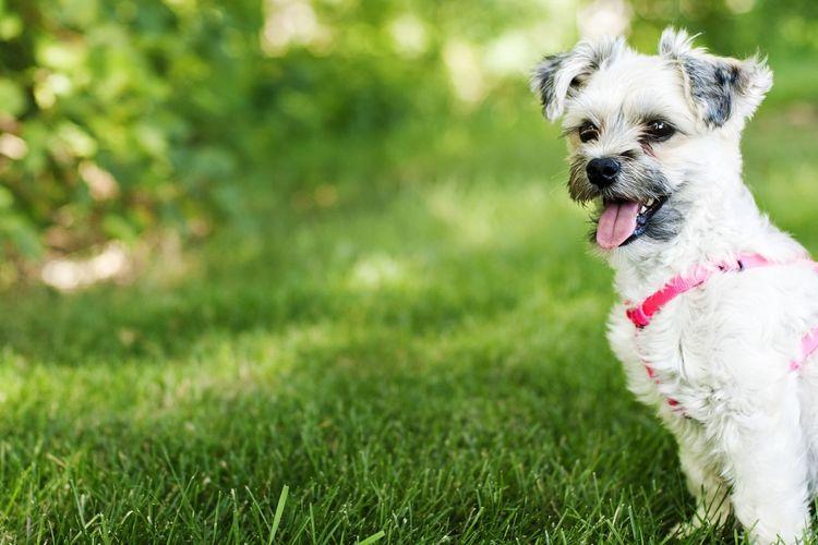 Mack Park Summer Dogs Charly Puppy Man's Best Friend Thirsty  Hot Day Summer Park