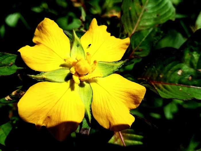 Nature. Flower