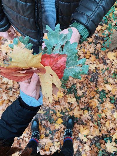 Leaves 🍂