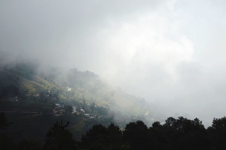 Scenic view of trees against sky during foggy weather
