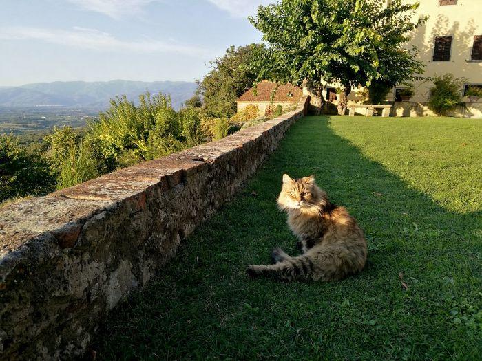 Cat on grass against sky