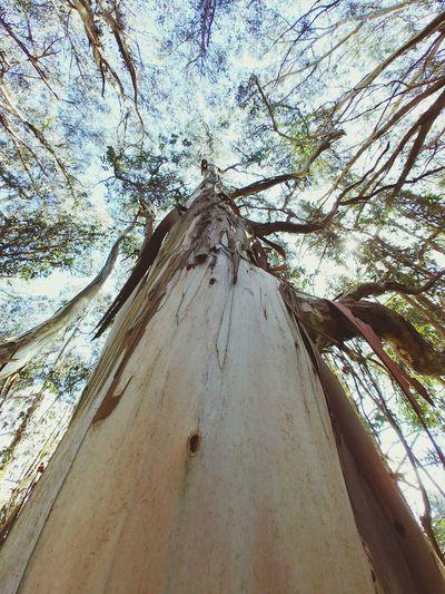 Lookingup Perspective Tree Sky