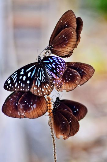 butterfly Butterfly - Insect Insect One Animal Animal Themes Animals In The Wild Animal Wing Butterfly Animal Wildlife Nature Beauty In Nature