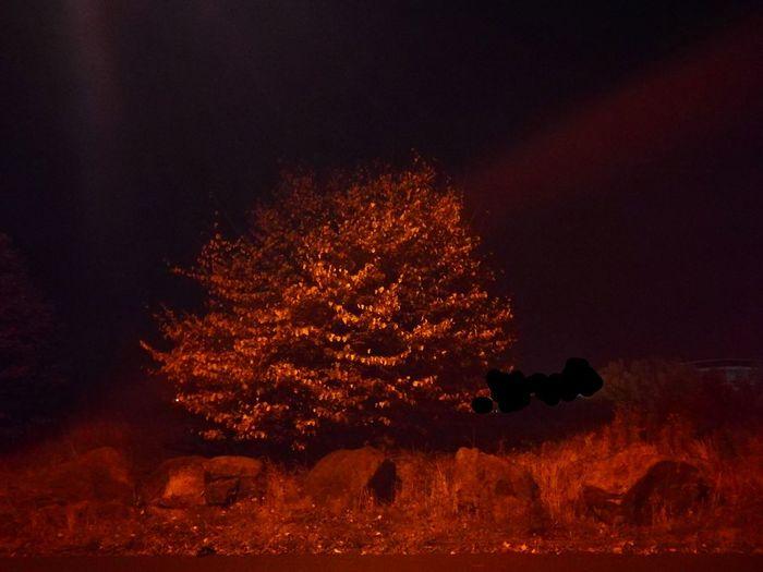 Urban night Autumn bray No People Outdoors Scape Neighbourhood Citylight Street Tree Lovelight