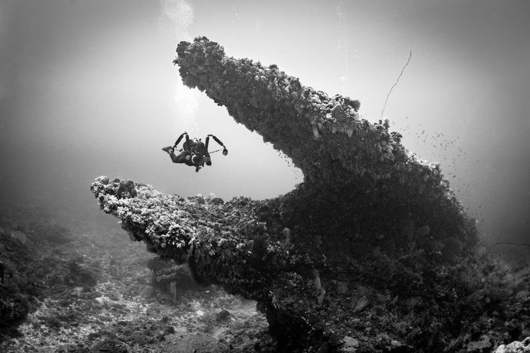 #Black&White #DIVING #green #photography #underwater Photography Beauty In Nature Nature Outdoors