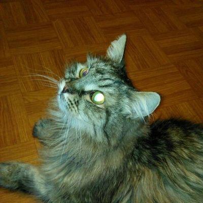 #cat #cats #2014 #instacats #instagramcats #catsagram #catlovers #we_love_cats #catsofinstagram #caturday #catoftheday #chat #кот #котэ #котик #instakotik #katz #katze #katzen #kucing #mycat #cutecats 2014 кот Cat Instacats Cats Instakotik Katze Котик Katzen Cutecats котэ We_love_cats Caturday Katz Chat Mycat Kucing Catsofinstagram Instagramcats Catsagram Catoftheday Catlovers