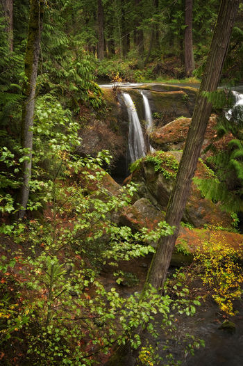 Whatcom Falls, Bellingham, Washington. A lovely little rain forest environment just outside the central core of Bellingham, Washington. Bellingham Washington Blurred Motion Cedar Environment Fir Flowing Flowing Water Forest Forest Photography Land Long Exposure Motion Nature No People Outdoors Power In Nature Rainforest Scenics - Nature Tree Water Waterfall Whatcom Falls Whatcom Falls Park WoodLand