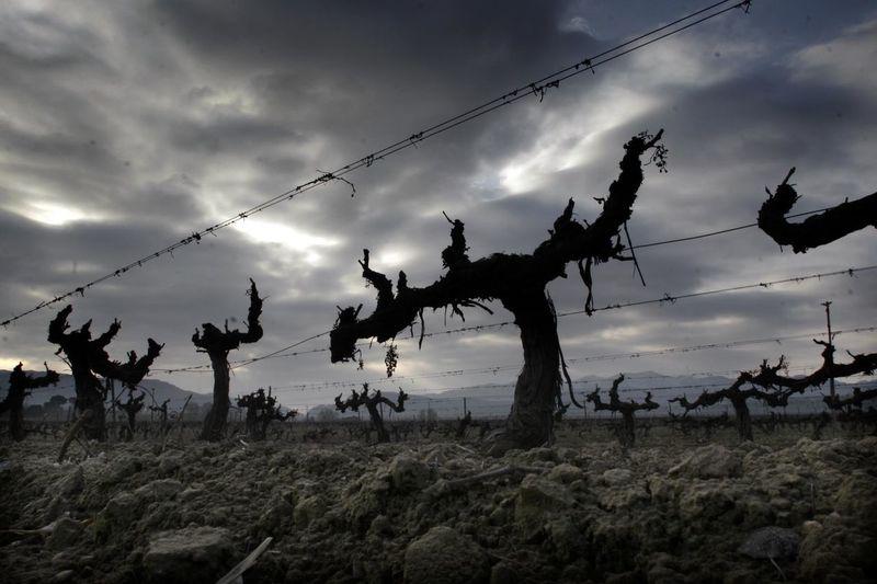 Vines in