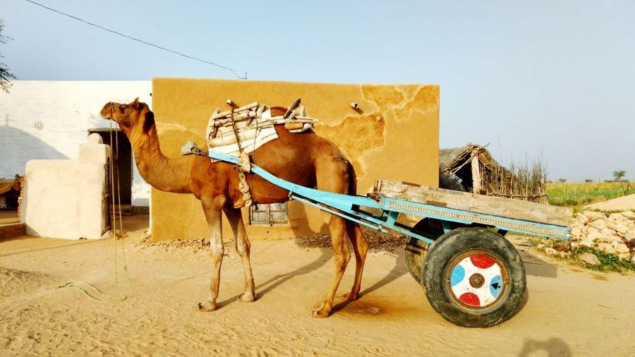 Horse cart on desert against clear sky
