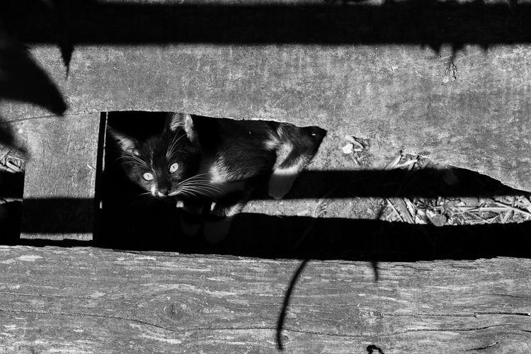 2018 Brandenburg Cat Domestic Domestic Animals Domestic Cat Feline Indoors  Katze Looking At Camera Mammal No People One Animal Pets Prignitz Relaxation Sunlight Whisker