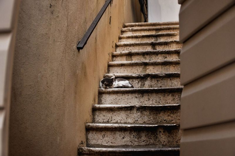 sleeping kitty Steps And Staircases Steps Staircase No People Outdoors Day Kitty Cat Sleeping Cat Summer Montenegro Travelling Nature Budva,Montenegro