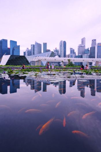 Fish Reflection Building Exterior Built Structure Architecture City Water Building Reflection Urban Skyline Sky