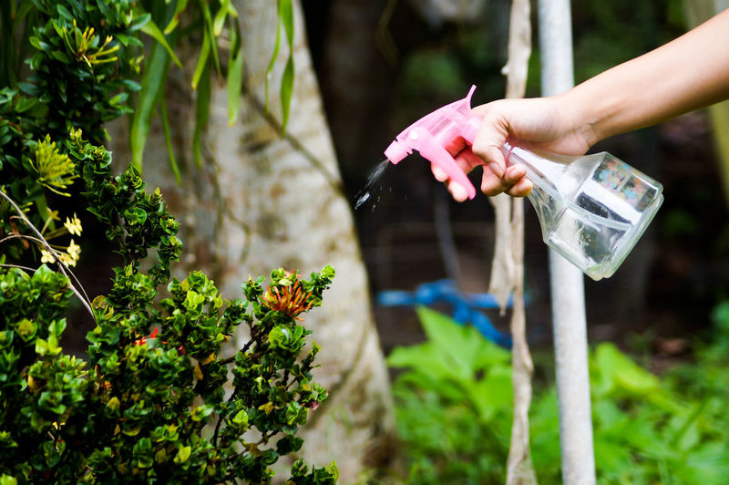 Close-up of person spraying water on plants