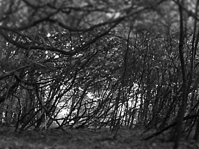 Forest Growth Flora Trees Nature Nature_collection Blackandwhite Black & White Black Blackandwhitephotography Day No People Dark Anstract Freeky Branches Artistic