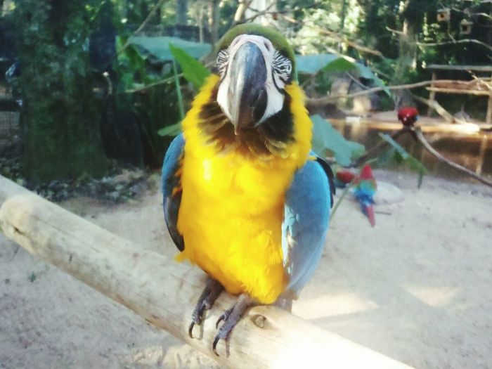 Macaw,nature Outdoors Day Macaw One Animal Nature Bird Gold And Blue Macaw Animal Themes ,exotic Travel Destinations Tourism Forest Life No People Animals🐾 Pets