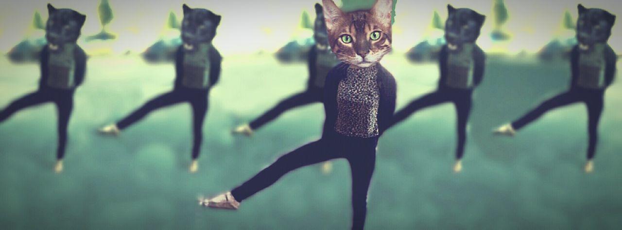 Kitty Bolshoi