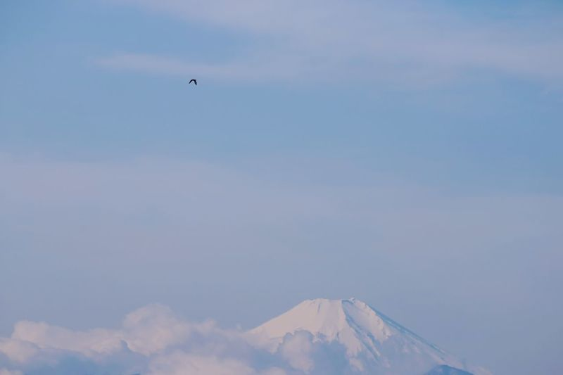 Deceptively Simple Flying Bird Flying High Flying Bird And Fuji Mountain Mt.Fuji Flying Bird And Snow Mountain High Flying Bird EyeEm Best Shots From My Point Of View EyeEm Nature Lover