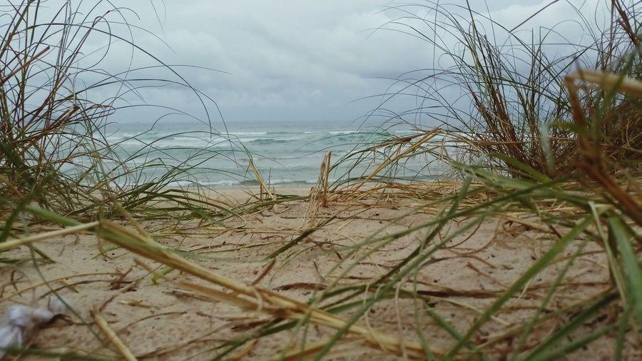 Water Sea Beach Sand Dune Sand Marram Grass Sky Horizon Over Water Grass