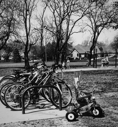 Tree Transportation Outdoors Beauty In Nature Beautiful Day Park Life Irwin Collection Spring Day Bikes Bike Riding Spring Photography Bicycle Adventures Parks And Recreation Black And White Photography Welcome To Black Trike Bicycles Bike Rack Let's Go Smarter