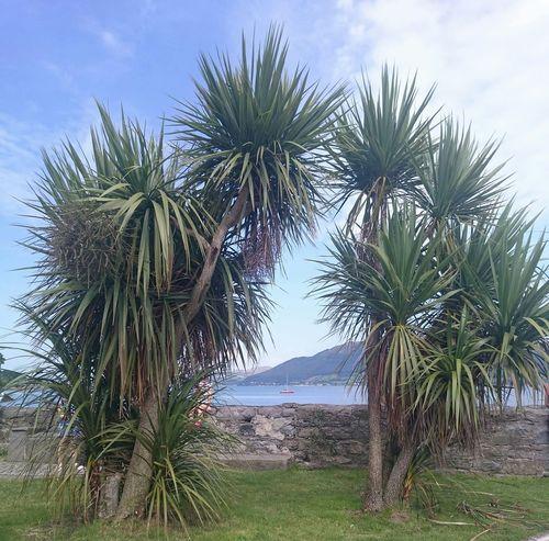 Beautiful Surroundings Ireland🍀 Eyeem Ireland Irelandinspires Discover Ireland Sightseeing