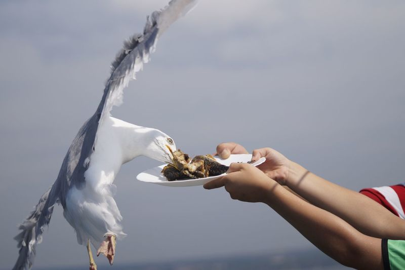 Close-Up Of People Feeding Seagull From Plate