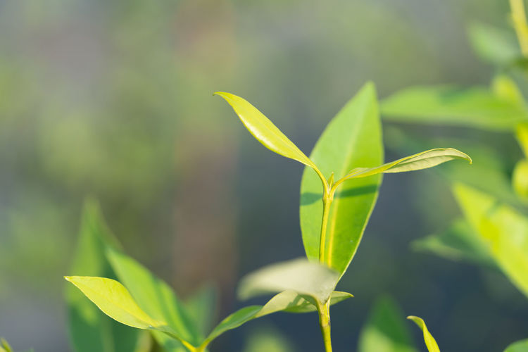 Growth Plant Part Leaf Green Color Plant Close-up Nature Beauty In Nature No People Day Vulnerability  Focus On Foreground Selective Focus Fragility Tranquility Outdoors Beginnings Freshness Sunlight Land