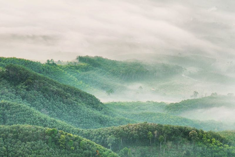 A silent green forest on mountains with fog Fog Mountain Green Nature Landscape Beauty In Nature No People Tree Mountain Forest Scenics Day Outdoors Sky Go Higher