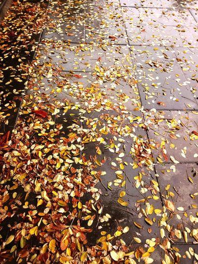 Rain Autumn colors Autumn🍁🍁🍁 Hüzün... Road City Backgrounds Leaf Autumn Full Frame Change High Angle View Close-up