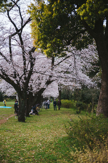 Akatsuka Park, Tokyo. Sakura Season 2016. Architecture Branch Building Exterior Built Structure Field Grass Green Color Growth Lawn Leisure Activity Lifestyles Men Nature Park Park - Man Made Space Person Sakura Tree Walking